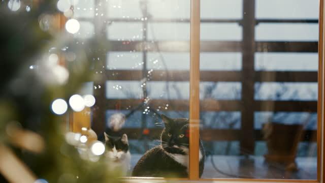 stockvideo's en b-roll-footage met katten die door deurglas staren - kleine groep dieren