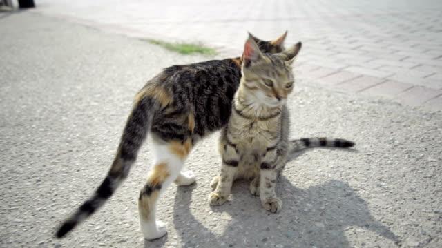 猫をご同伴いただけます。 - 2匹点の映像素材/bロール