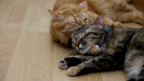 cats - cute stock videos & royalty-free footage