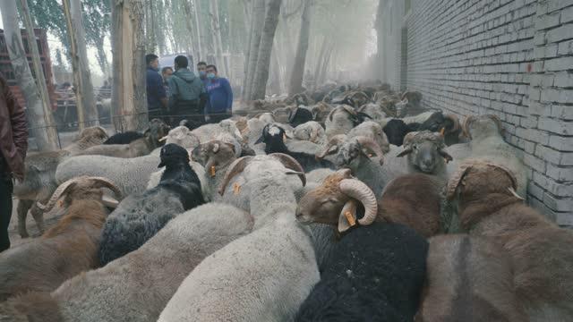 cattle and sheep trading bazaar(market),kashgar, xinjiang,china. - salesman stock videos & royalty-free footage