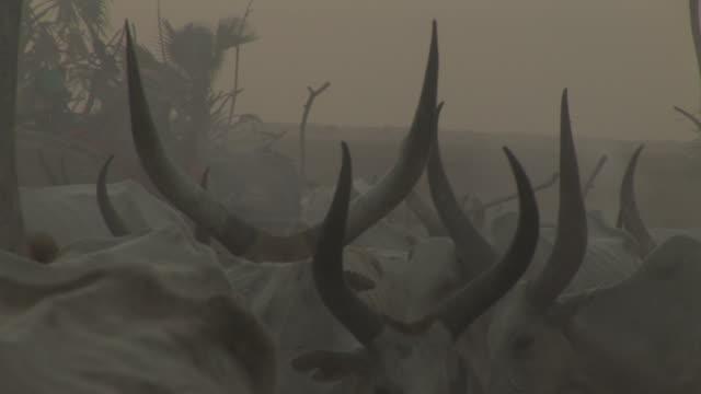 A cattle camp in South Sudan