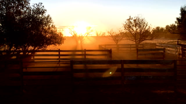 cattle corral at sunset - cattle stock videos & royalty-free footage