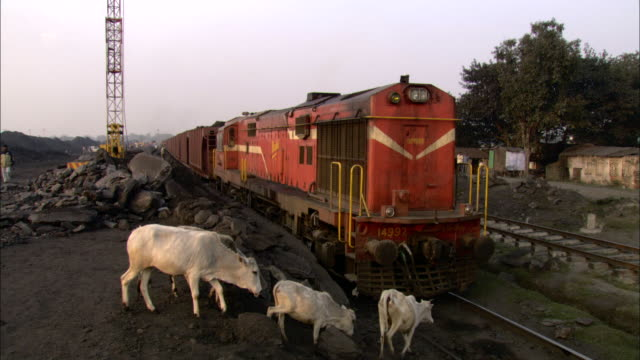 cattle cross a train track and pass in front of a coal train. - animal crossing sign stock videos & royalty-free footage