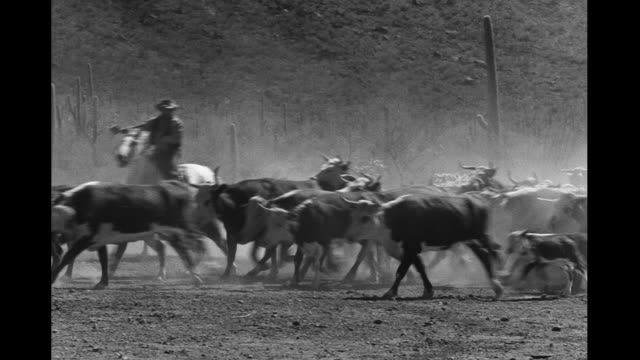 cattle drive - rancher stock videos & royalty-free footage