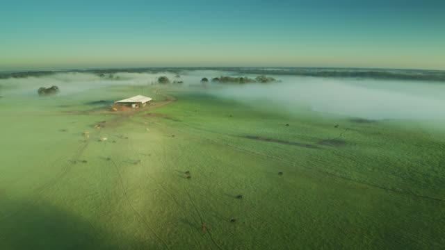 allevamento di bestiame coperto nella nebbia mattutina - colpo di drone - alabama video stock e b–roll