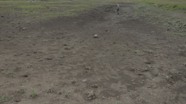 cattle graze near the carcass of a dead cow on a drought affected farm in mpumalanga south africa on friday nov 27 koos dafel a farmer inspects the... - provinz mpumalanga stock-videos und b-roll-filmmaterial