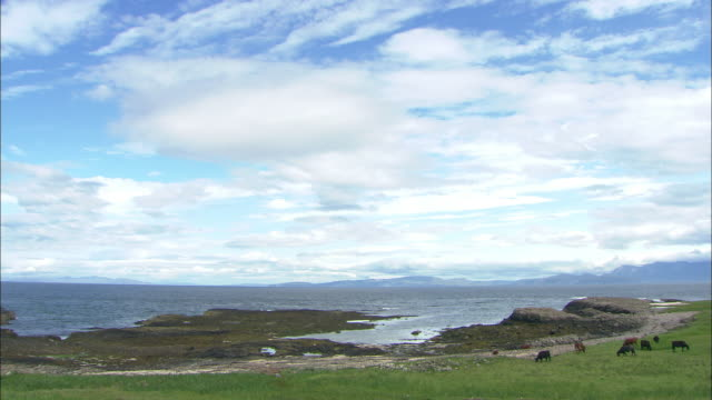 Cattle graze on the island of Canna in the Scottish Inner Hebrides.
