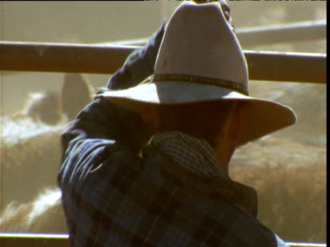 cattle herder puts hat on as he watches his herd, alice springs, australia - cowboy stock videos & royalty-free footage