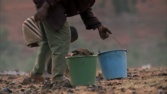 cattle herders collect dung for fuel, madagascar - agricultural cooperative stock videos and b-roll footage