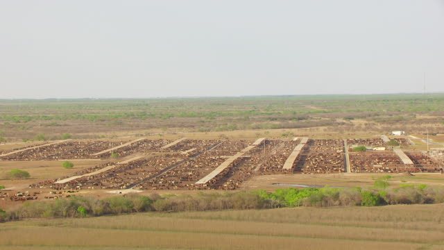 WS AERIAL ZI cattle in pens at King Ranch / Kingsville, Texas, United States