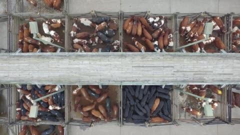 viehmarkt - south america stock-videos und b-roll-filmmaterial