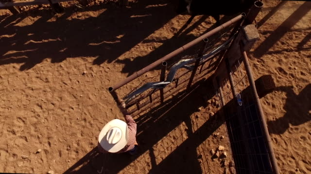 cattle ranch in southern arizona usa - ranch stock videos & royalty-free footage