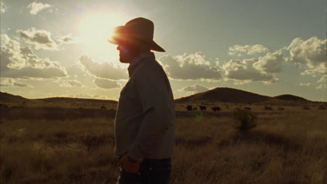stockvideo's en b-roll-footage met ms pan cattle rancher at sunset looking over his herd / marfa, texas, usa  - ranch