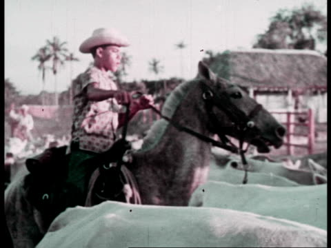 cattle ranching on ranching cooperatives in cuba / men on horseback roping and herding cattle - cowboyhut stock-videos und b-roll-filmmaterial
