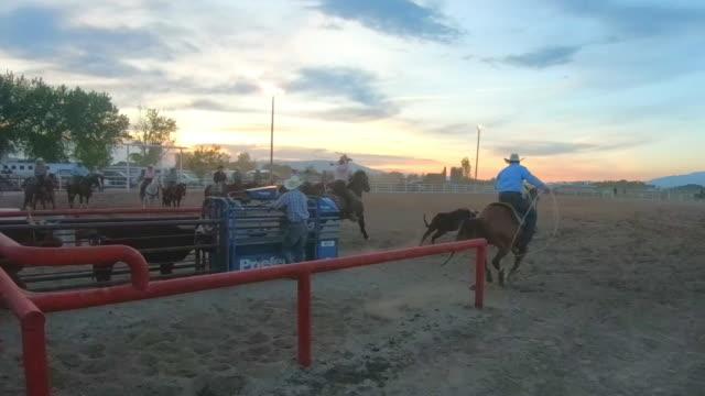 Rinder bei einem Sonnenuntergang Rodeo Roping