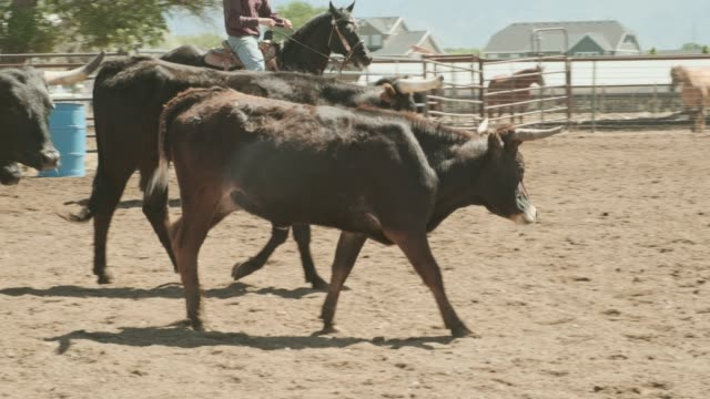cattle roundup - small group of animals stock videos & royalty-free footage