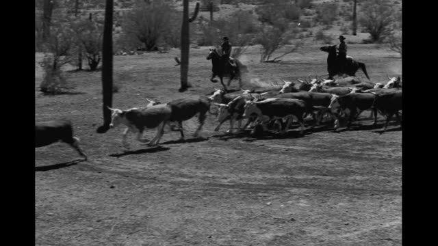 cattle rustlers - rancher stock videos and b-roll footage