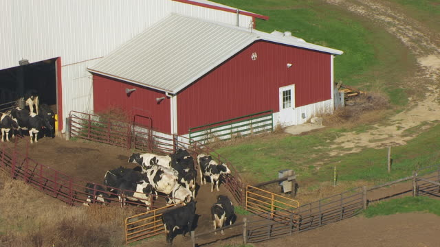 ws zo aerial pov cattles grazing at campus dairy cattle research center, barn and grain elevators in background / columbia county, wisconsin, united states - columbia center stock videos & royalty-free footage
