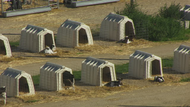 ws aerial pov cattles resting outside of calf hutches at campus dairy cattle research center / columbia county, wisconsin, united states - columbia center stock videos & royalty-free footage