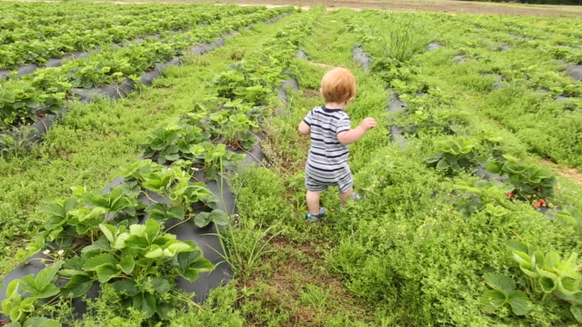 caucasian baby boy walking in farm field watching butterflies - 男の赤ちゃん一人点の映像素材/bロール