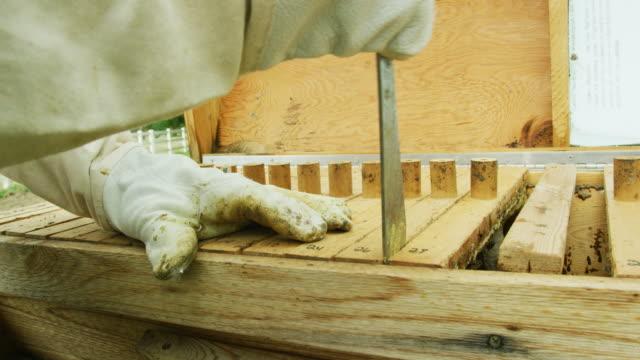 vídeos y material grabado en eventos de stock de un apicultor caucásico en sus trillandos abre la tapa de una colmena de madera y utiliza una herramienta de apicultura para enpalancar marcos al aire libre - guantes de protección