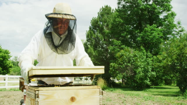 a caucasian beekeeper in his thirties wearing a beekeeping hat, a veil, and gloves removes the lid off of a wooden beehive and sets it down and then uses a metal hive tool to pry the hive open outdoors - lid stock videos & royalty-free footage