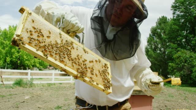vidéos et rushes de un apiculteur caucasien dans la trentaine portant un chapeau d'apiculture, un voile et des gants utilise une poignée de cadre pour enlever un cadre d'une ruche à l'extérieur - ruche