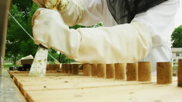 vídeos y material grabado en eventos de stock de un apicultor caucásico en sus trillas usando un sombrero de apicultura, un velo y guantes usa una herramienta para quitar un marco de una colmena al aire libre - guantes de protección