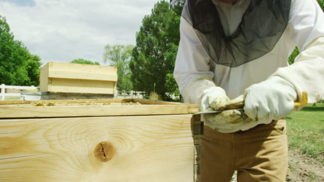 a caucasian beekeeper in his thirties wearing a beekeeping hat, a veil, and gloves uses a metal hive tool to pry a wooden beehive open outdoors - protective glove stock videos & royalty-free footage