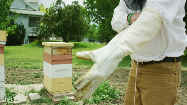 a caucasian beekeeper in his thirties wearing a beekeeping hat and veil puts on gloves next to beehives and a house outdoors - glove stock videos & royalty-free footage