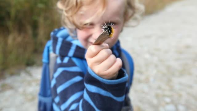 caucasian boy holding caterpillar on stick - wildlife stock videos & royalty-free footage