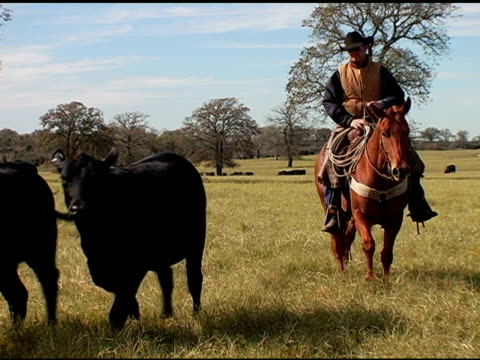 caucasian cowboy rides brown horse on texas ranch - cowboy ranch stock videos & royalty-free footage