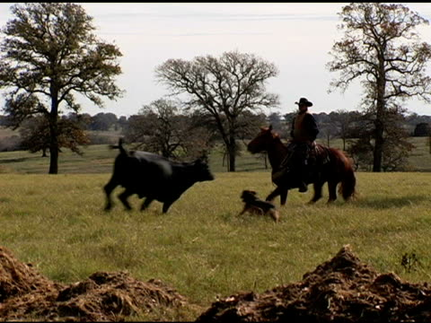 caucasian cowboy rides brown horse on texas ranch - herding stock videos and b-roll footage