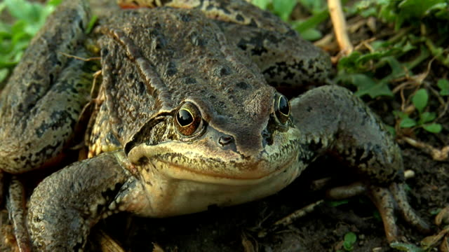 caucasian frog - prince stock videos and b-roll footage