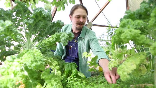 caucasian gardener examining plants - vanguardians stock videos & royalty-free footage