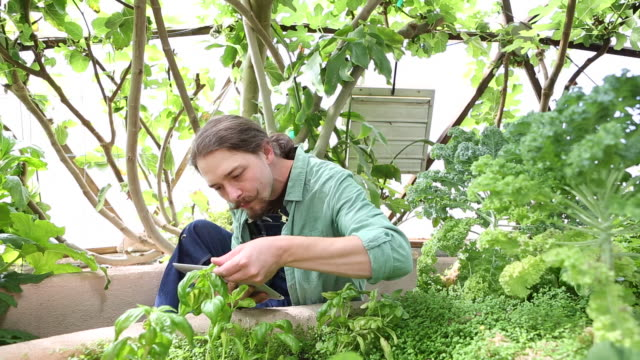 caucasian gardener using digital tablet - haar nach hinten stock-videos und b-roll-filmmaterial