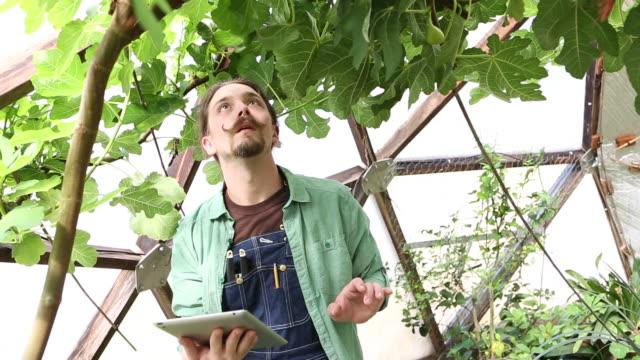 vídeos y material grabado en eventos de stock de caucasian gardener using digital tablet - cabello recogido