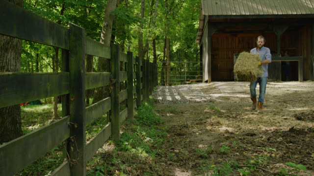 a caucasian man in his forties throws a bale of hay into a horse pasture next to a horse barn surrounded by forest on a sunny day in tennessee - farmer hay stock videos & royalty-free footage