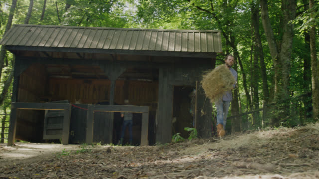 a caucasian man in his forties throws a bale of hay into a horse pasture while a woman in her forties brushes her horse inside a horse barn surrounded by forest on a sunny day in tennessee - bale stock videos & royalty-free footage