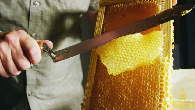 a caucasian man uses a knife to slice through honeycomb and scrape the wax into a nearby bucket while honey drips down the wooden frame - stick plant part stock videos & royalty-free footage