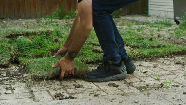a caucasian man wearing jeans and black athletic shoes picks up a square of sod lying on a dirty brick pavement in a residential backyard - landscaped stock videos & royalty-free footage