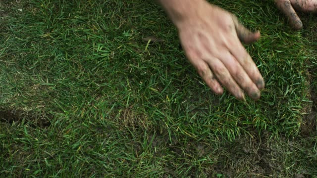 a caucasian man's hands flip a square of sod on to a muddy bit of ground and then push and pat it into place in a residential backyard (laying sod) - installing stock videos & royalty-free footage