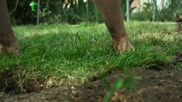 vídeos de stock e filmes b-roll de a caucasian man's hands flip a square of sod on to a muddy bit of ground and then push and pat it into place in a residential backyard (laying sod) - arranjo