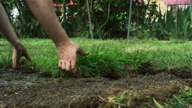 a caucasian man's hands flip a square of sod on to a muddy bit of ground and then push and pat it into place in a residential backyard (laying sod) - putting stock videos & royalty-free footage