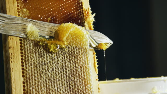 a caucasian person uses a knife to slice through honeycomb and scrape the wax into a nearby bucket while honey drips down the wooden frame - stick plant part stock videos & royalty-free footage