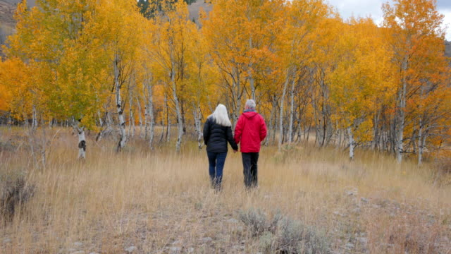 vídeos de stock, filmes e b-roll de caucasian senior couple walking near autumn trees - árvore de folha caduca
