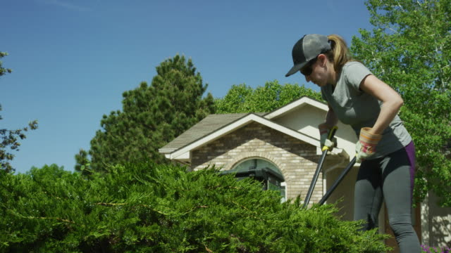A Caucasian Woman in Her Thirties Wearing a Hat, Sunglasses, and Gardening Gloves Uses a Pair of Loppers to Prune a Juniper Bush in the Front Yard of a House on a Sunny Day