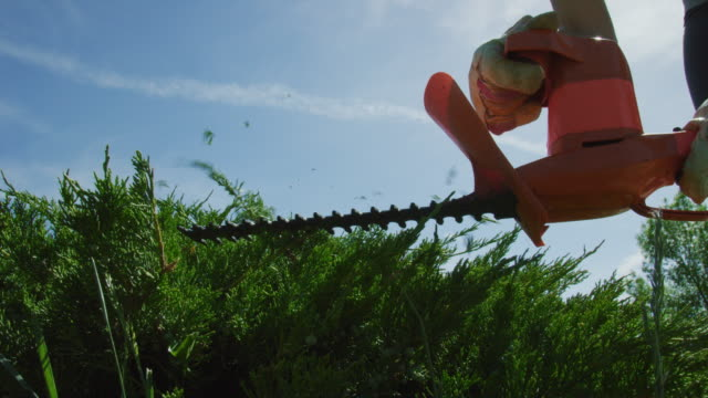 a caucasian woman in her thirties wearing a hat, sunglasses, gardening gloves, and hearing protection uses an electric hedge trimmer to prune a juniper bush on a sunny day - secateurs stock videos & royalty-free footage