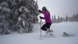 A Caucasian Woman in Winter Clothing Snowshoes with Poles Across a Field of Snow Amongst Pine Trees as Her Gray Dog Follows Her Under a Gray Winter Sky in Western Colorado