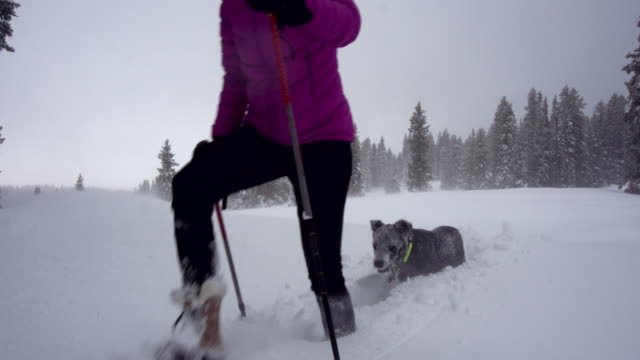 a caucasian woman in winter clothing snowshoes with ski poles across a field of snow amongst pine trees as her gray dog follows her under a gray winter sky in western colorado - ski clothing stock videos and b-roll footage